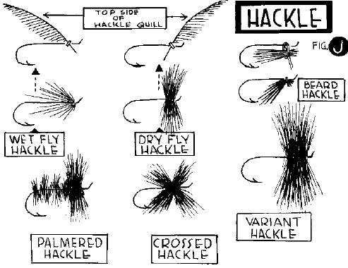 Hackle