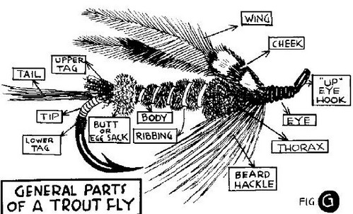Parts of a trout fly